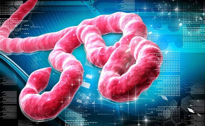 images_straipsniu_foto_3531_ebola_ko_150100_e01_xxx
