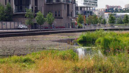 Žaliosios miestų erdvės
