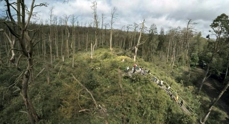 """Kadras iš filmo """"Rūgštus miškas"""" (rež. R.Barzdžiukaitė)"""