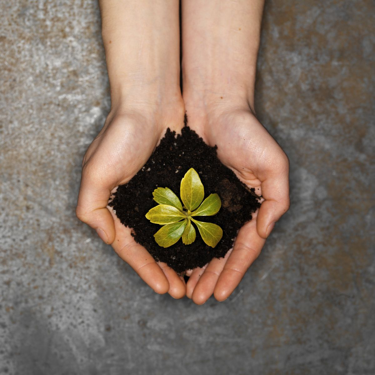 Elevated view of human hands holding sapling