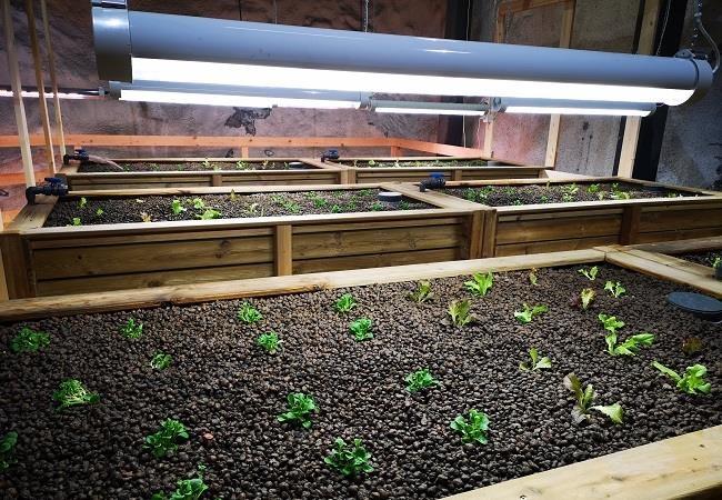 Šveicarijos centro SCAUT požeminio ekologinio ūkininkavimo projektas, Inovacinio požeminės erdvės panaudojimo kategorija. Foto: SCAUT