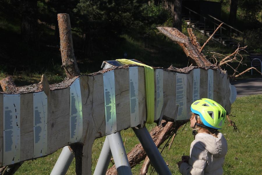 """""""Sudėtinės miško dalys. Pušies mėginys"""" (autoriai J.Daubaraitė, J.Žukauskas). Foto: Jono Žukausko"""
