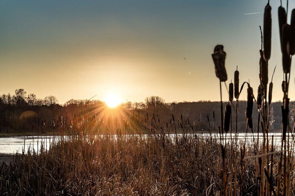Nemuno pakrantė Šančiuose – bene vienintelė vieta, kur Kaune galima prieiti llaukinės gamtos. Foto: Darius Petrulis.