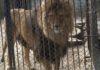 Daugelis Kauno zoologojos sodo gyvūnų iki šiol buvo priversti gyventi apverktinomis sąlygomis. Foto: ©PILOTAS.LT
