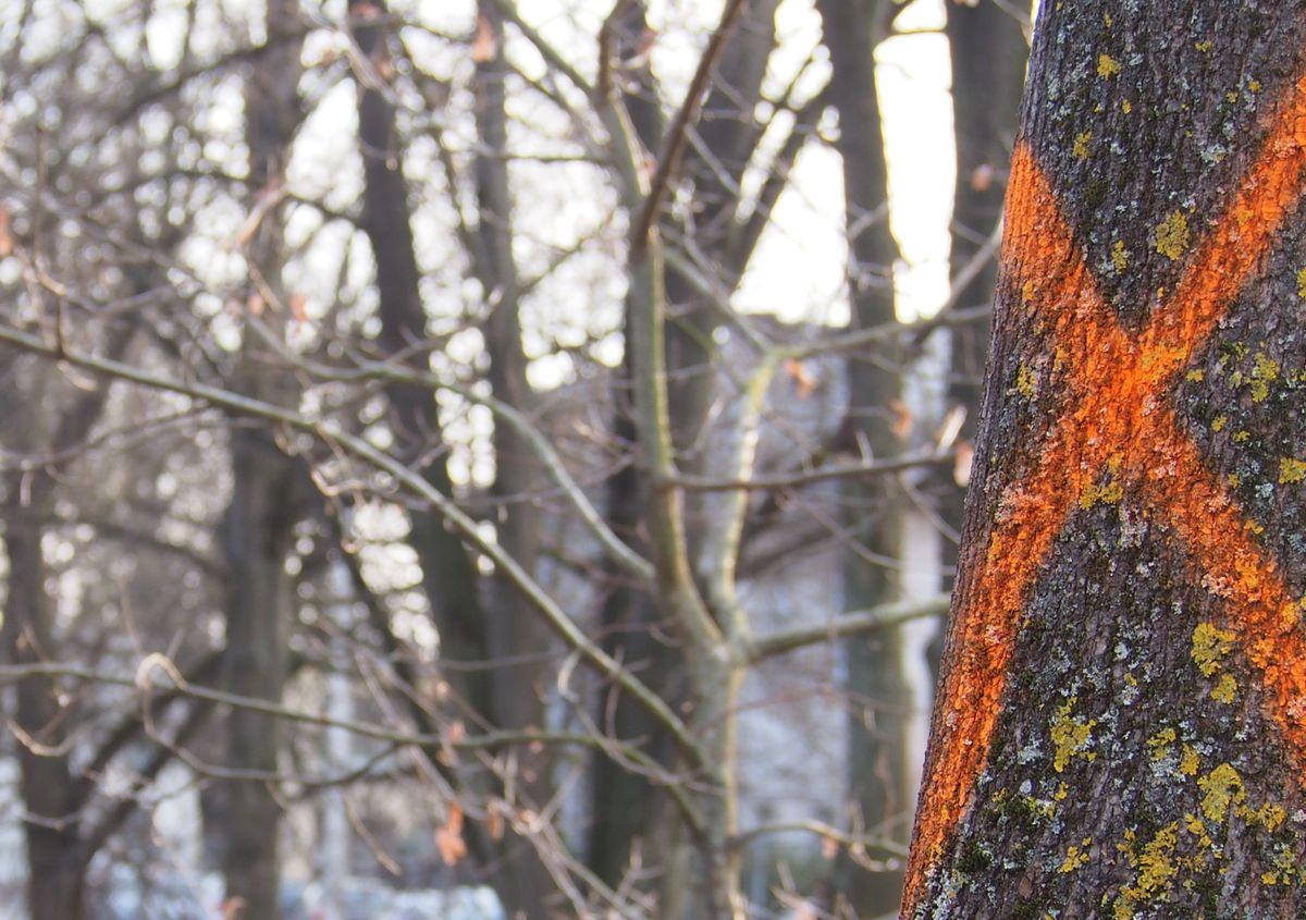 Medžių kirtimas