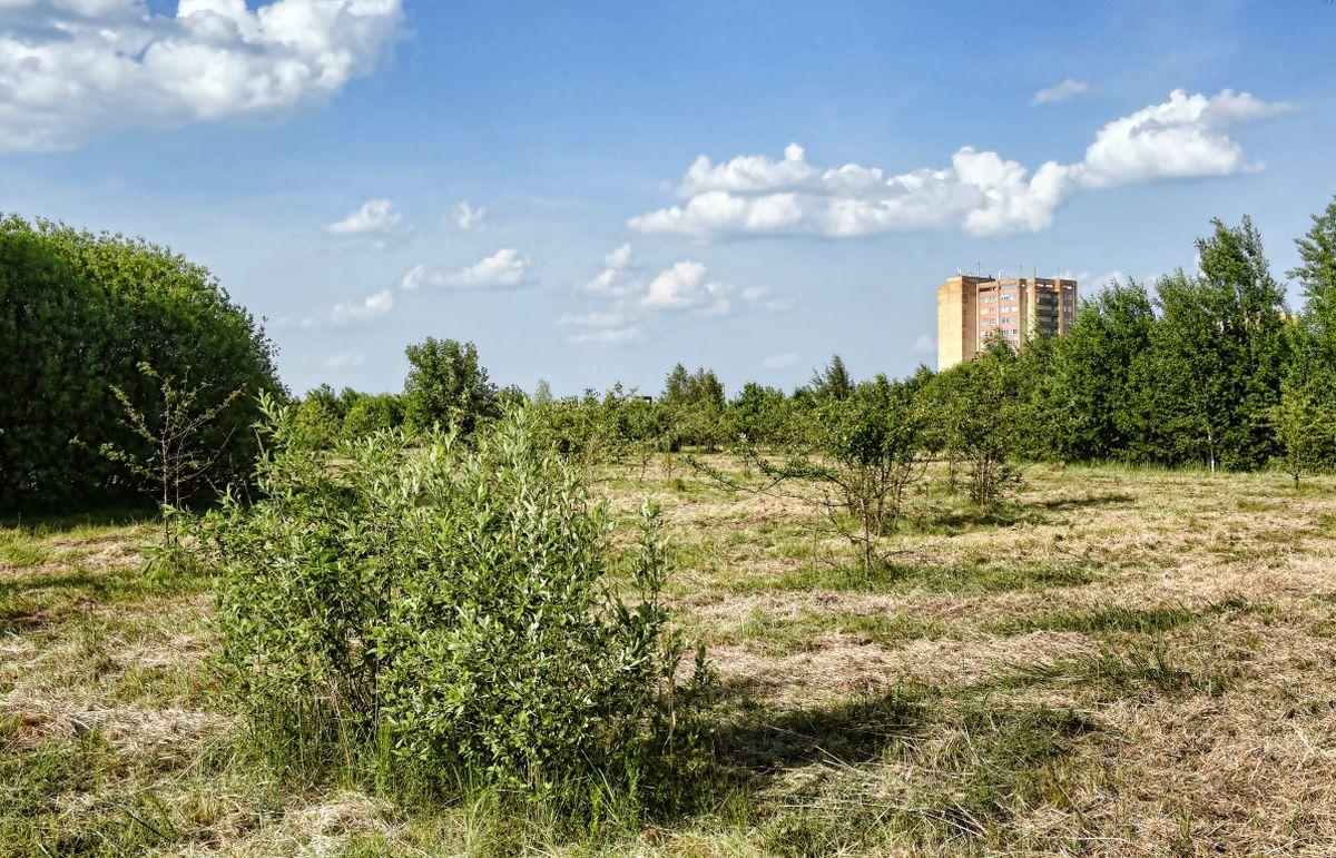 Kniaudiškių parkas