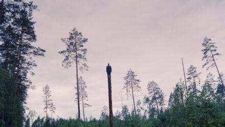 Miško statulos